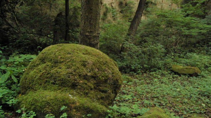 Brusnianske gule zostávajú záhadou